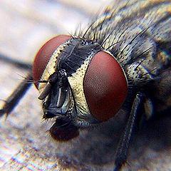 """photo """"Fly Eyes"""""""