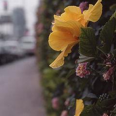 "photo ""City flowers"""