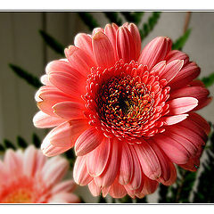 """фото """"This is a different Flower... This is a Flower for"""""""
