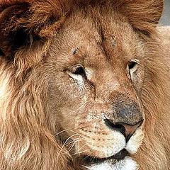 """фото """"King"""""""
