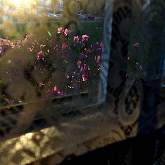 "photo ""Through my window"""