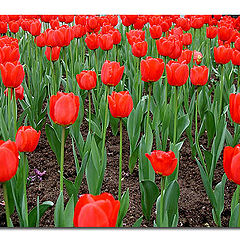 """photo """"Some red flowers"""""""