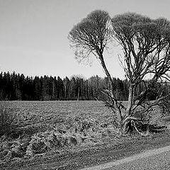 """фото """"Common Roadside Landscape"""""""