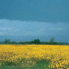 "фото ""Yellow landscape"""