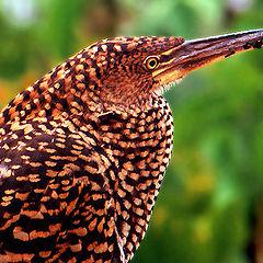 "фото ""Pantanal`s birds"""