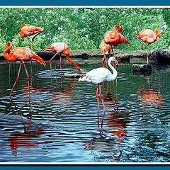 "фото ""Фламинго (разные)"""