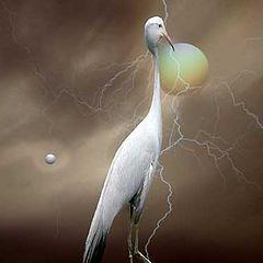 "photo ""the strange birds"""