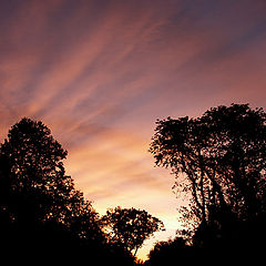 """фото """"Sunset in the forest"""""""