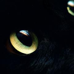 """photo """"Cats_Eyes"""""""