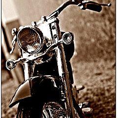 "photo ""Harley"""