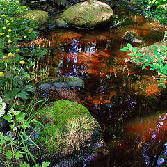 "photo ""Little stream in a dense wood."""