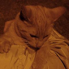 "photo ""Gold cat..."""
