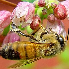 """фото """"Just a bee"""""""