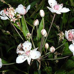 """photo """"Marsh flowers"""""""