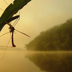 "photo ""Mosquito`s dream"""