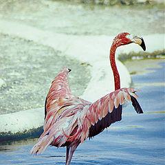 "фото ""...фламинго..."""