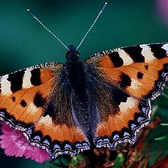 """photo """"The butterfly"""""""