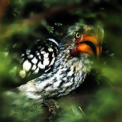 """фото """"Всевидящее око джунглей"""""""