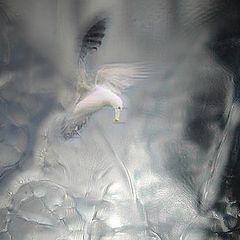 "photo ""cristal bird"""
