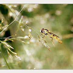 """фото """"Из жизни насекомых (то взлёт, то посадка...)"""""""