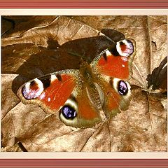 """photo """"The butterfly on foliage, spring."""""""