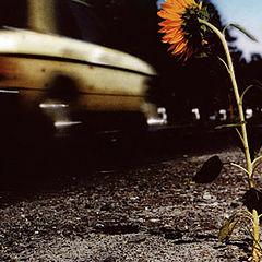"photo ""... In the last life - road patrol..."""