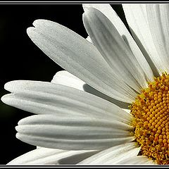 """photo """"White and yellow"""""""