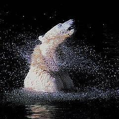 """фото """"Галактика Белой Медведицы"""""""
