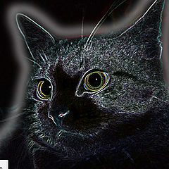 """photo """"Black cat..."""""""