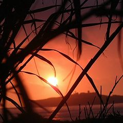 """фото """"Sun in the Willows"""""""