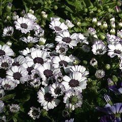 "фото ""Flowers carpet"""