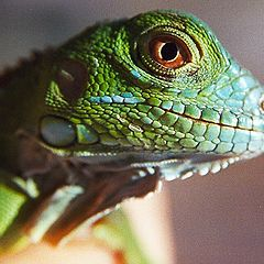 "фото ""Louie the Lizard"""