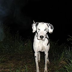 """photo """"Dog Baskervil."""""""