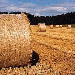 """фото """"hay `n roll"""""""