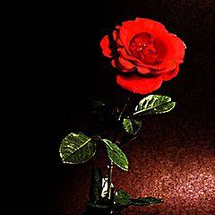 "photo ""rose"""