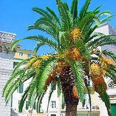 """фото """"Greek Palm"""""""