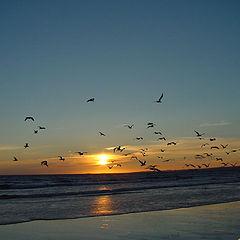 """фото """"Sunset Dancers"""""""
