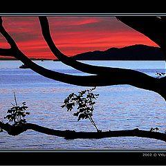 """photo """"Through the tree"""""""