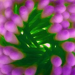"""фото """"экзотическое соцветие"""""""
