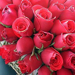 """фото """"little red roses 4"""""""
