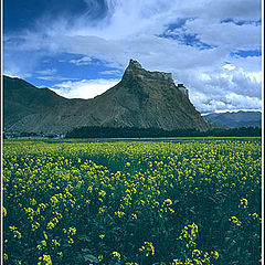 "фото ""Tibet 5"""