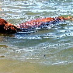 "photo ""To me the sea till an elbow . . ."""