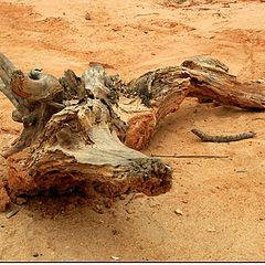 """фото """"A crocodile on the beach"""""""