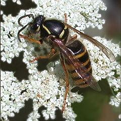 """photo """"Wasp"""""""