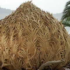 "фото ""Heart of palm"""