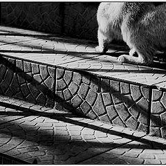 """photo """"A cat in the corner"""""""