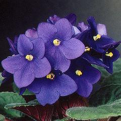 """фото """"violets #02"""""""