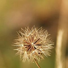 """фото """"вожидании ветра"""""""