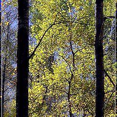 """photo """"Gates to the autumn"""""""