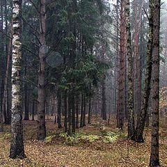"""photo """"Wood (autumn)"""""""